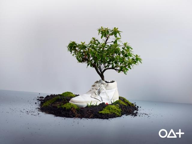 oat shoes, tenis que viram plantas