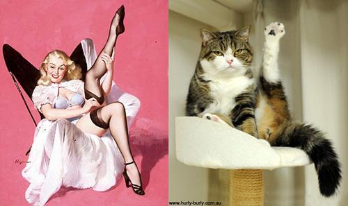 pin ups & gatos