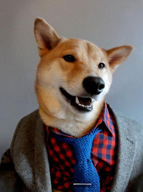 tumblr moda masculina - menswear dog