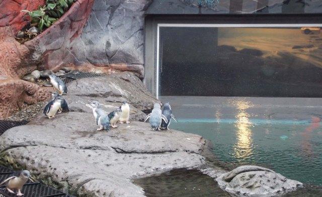 antarctic centre